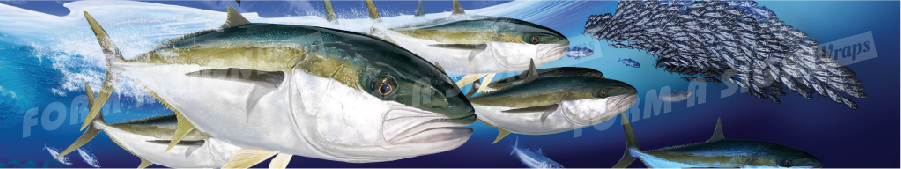Custom yellowtail kingfish fish boat wrap design