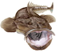 flathead fish decals for your boat