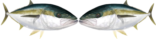 kingfish stickers for a boat