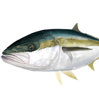 kingfish stickers for your boat
